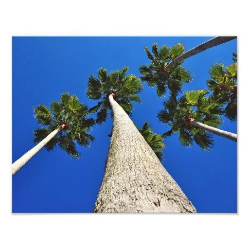 Palm Trees to Heaven Photo Art