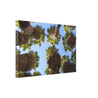 Palm Trees Unique View Canvas Art