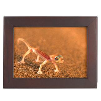 Palmatogecko On Sand Dune, Swakpomund, Erongo Keepsake Box