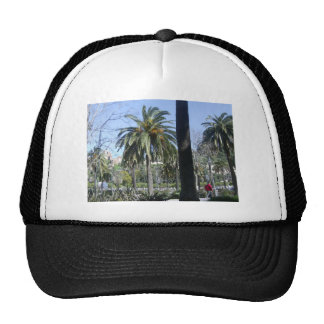 Palms in Malaga Hat