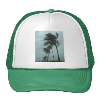 Palms in the Storm Hat