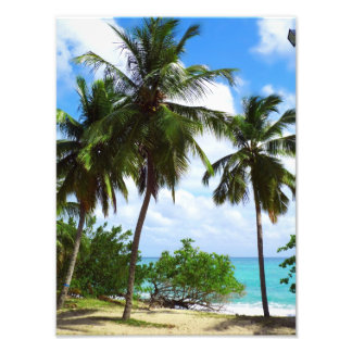 Palmtrees on Tropical Seascape Photo Enlargement