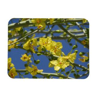 Palo Verde Blooms Rectangular Photo Magnet