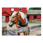 Palomino By Red Barn Announcements