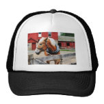 Palomino By Red Barn Trucker Hat