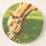 Palomino Horse Grazing Coaster