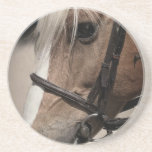 Palomino Horse in Bridle Beverage Coasters