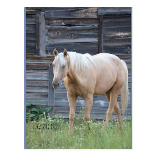 Palomino horse post card