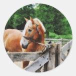 Palomino in Paddock Classic Round Sticker