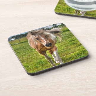 Palomino Paint Horse-lovers Gift Collection Coasters