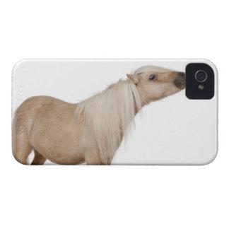 Palomino Shetland pony - Equus caballus (3 years iPhone 4 Cover