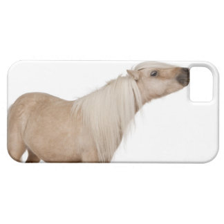 Palomino Shetland pony - Equus caballus (3 years iPhone 5 Covers