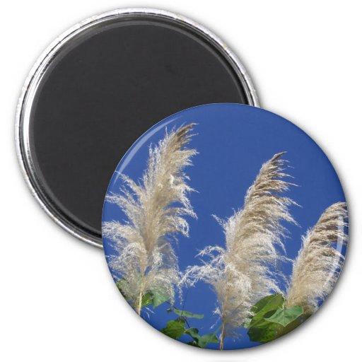Pampas Grass In Bloom Fridge Magnet