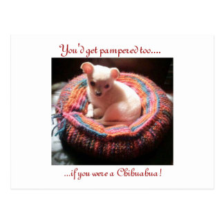 Pampered Chihuahua Dog Postcard