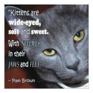 Pam's Kitten Photograph