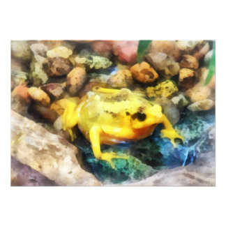 Panamanian Golden Frog Personalized Announcement