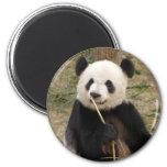 panda106 magnet