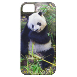 Panda at the San Diego Zoo Barely There iPhone 5 Case