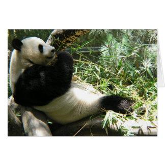 Panda at the San Diego Zoo Card
