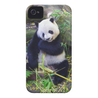 Panda at the San Diego Zoo iPhone 4 Case