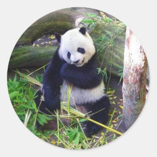 Panda at the San Diego Zoo Round Sticker