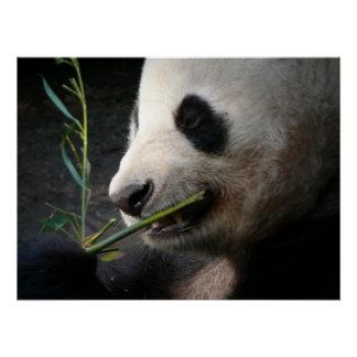 Panda Bear Black White Animal Zoo Wild Pattern Art