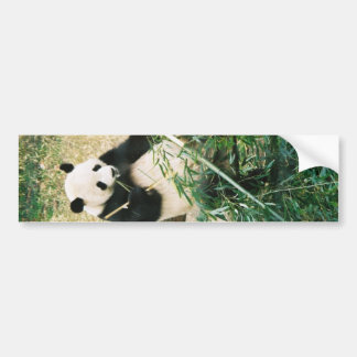 Panda Bear Bumper Sticker