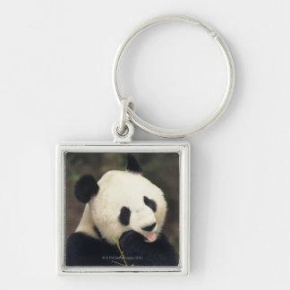 Panda bear, (Close-up) Silver-Colored Square Key Ring