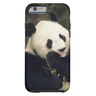 Panda bear, (Close-up) Tough iPhone 6 Case