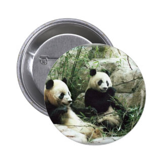 Panda bear eating and playing 6 cm round badge