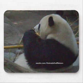 Panda Bear Eating Bamboo Mousepad
