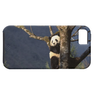 Panda bear in tree , China Case For The iPhone 5