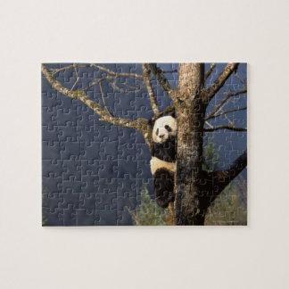 Panda bear in tree , China Jigsaw Puzzle