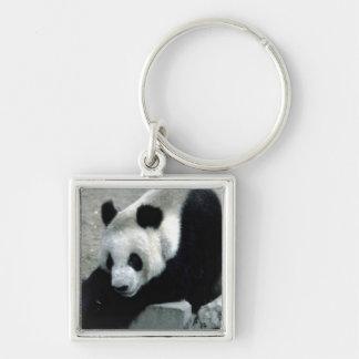 Panda Bear on Rocks Silver-Colored Square Key Ring