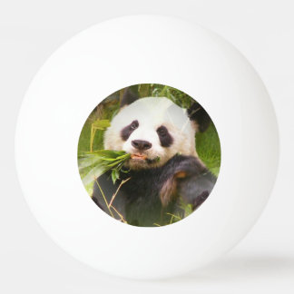 Panda Bear Ping Pong Ball