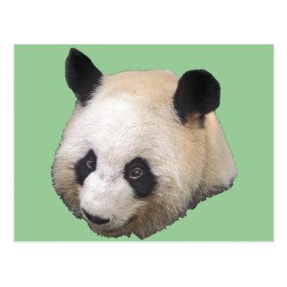 Panda Bear Post Cards