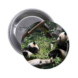 Panda Bears Button