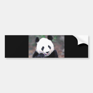 Panda Bumper Sticker