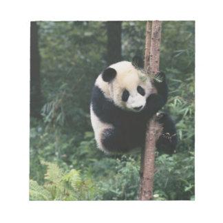 Panda cub climbing the tree, Wolong, Sichuan, Notepads
