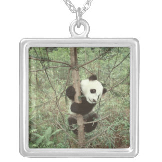 Panda cub climbing tree, Wolong, Sichuan, Silver Plated Necklace