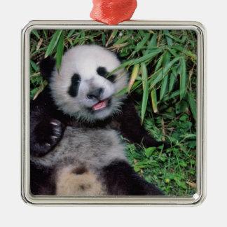 Panda cub in the bamboo grove, Wolong, Christmas Ornament