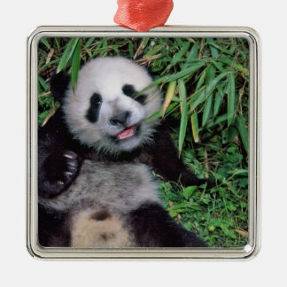 Panda cub in the bamboo grove, Wolong, Silver-Colored Square Decoration
