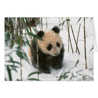 Panda cub on snow Wolong Sichuan China 2 Greeting Card