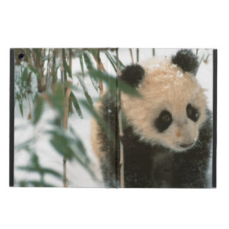 Panda cub on snow, Wolong, Sichuan, China 2 Cover For iPad Air