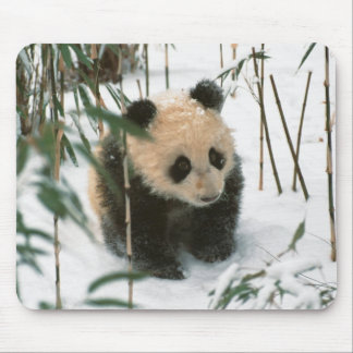 Panda cub on snow, Wolong, Sichuan, China 2 Mouse Mat