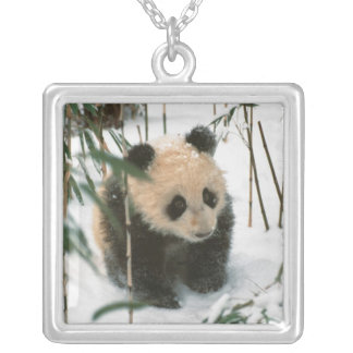 Panda cub on snow, Wolong, Sichuan, China 2 Silver Plated Necklace