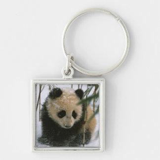 Panda cub on snow, Wolong, Sichuan, China Silver-Colored Square Key Ring