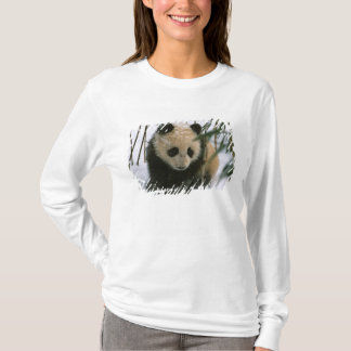 Panda cub on snow, Wolong, Sichuan, China T-Shirt