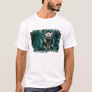 Panda cub on tree, Wolong, Sichuan, China T-Shirt