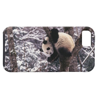 Panda cub playing on tree covered with snow, iPhone 5 case